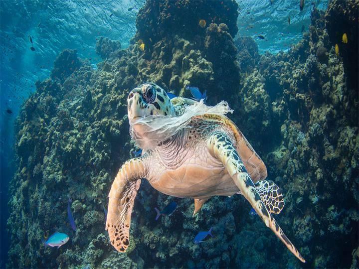 Plastic bags are threating marine life